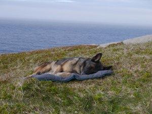 Queeny ist erschöpft von der langen Wanderung